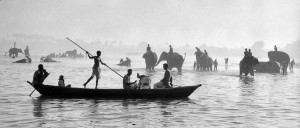 India, 1956. Washing elephants in the Ganges.
