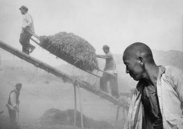 China, 1957. Harvest in Shaanxi province.