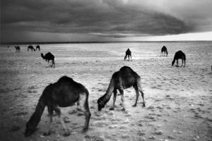 Désert au sud de l'Algérie, fin des années 1960