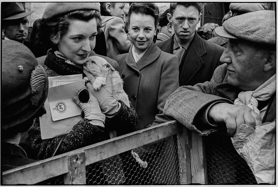 Pet's corner, London, 1954