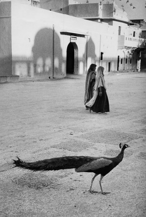 The peacock, in front of Jaipur palace, 1956