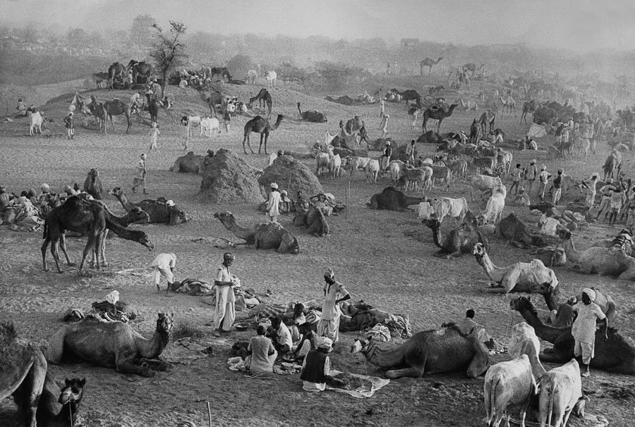 Camel market, Nagaur, Rajasthan, 1956