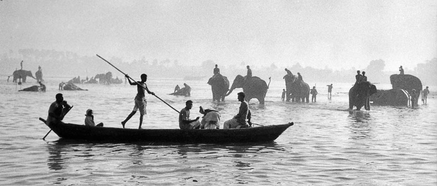 Elephants bathing in the Gange, 1956
