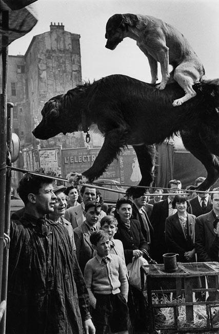 Rue Mouffetard, 1953