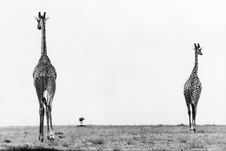 Kenya, 1961.