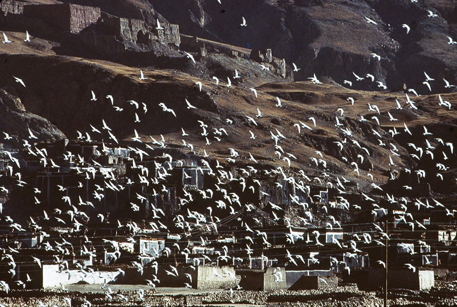 Bird migration over Sakya, 1985