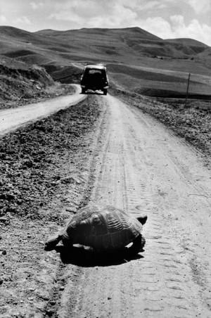 On the road to Van, 1955