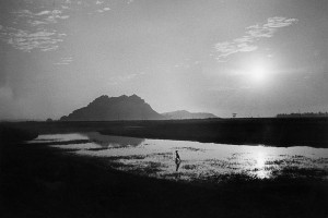 Rice fields in Thanh Hoa province, 1969